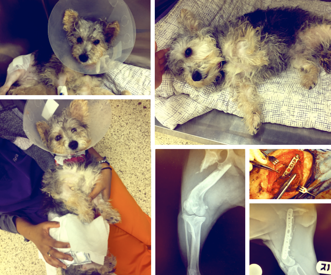 Noah's Arks - PENNY (CAIRN & YORKIE MIX)