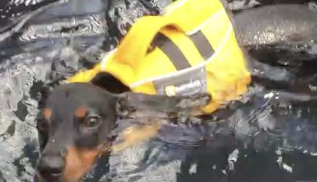 Noah's Arks Rescue